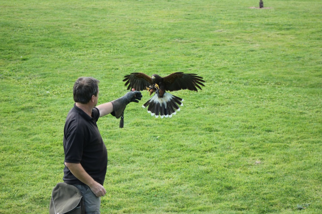 Falconry Fun
