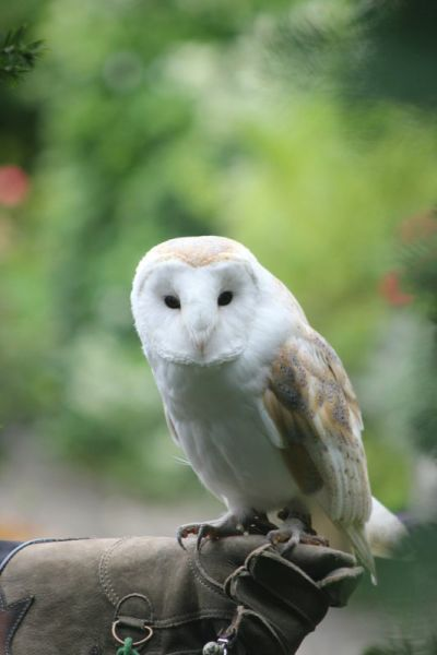 owl-ring-bearer-simone-chris-thornbury-IMG_3702